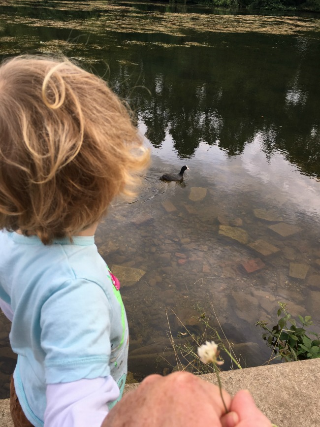 Tredegar-House-&-gardens-a-toddler-explores-toddler-looking-at-coot-on-lake