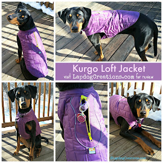 rescued doberman mix dog in Kurgo jacket