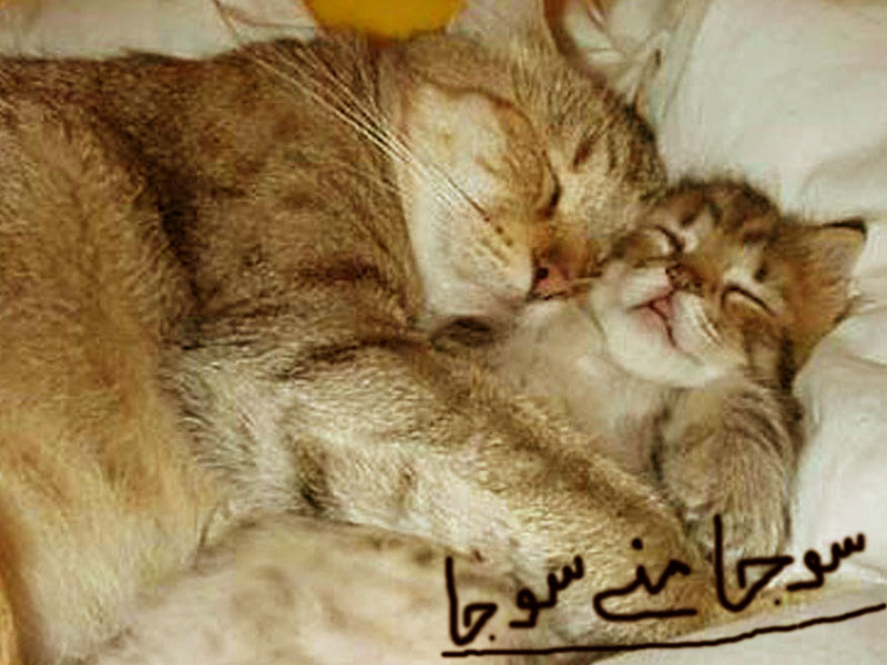 Cute cat picture photo | free download.