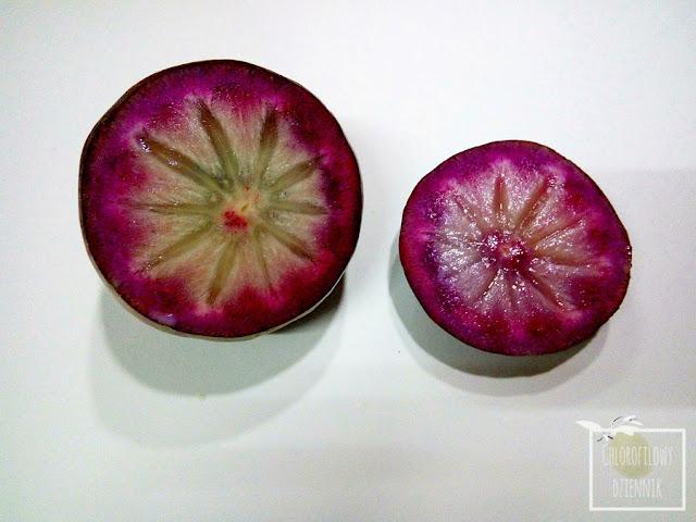 Star Apple, caimito (Chrysophyllum caimito) - tropikalny, egzotyczny owoc z ameryki, ciekawe, mało znane owoce tropikalne, ciekawostki botaniczne, rośliny owocowe z tropików, uprawa, opis, nasiona, pestki, wygląd i smak owocu,