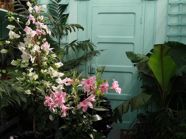 joli mois de mai, le jardin fait à son gré - Page 4 DSC07309