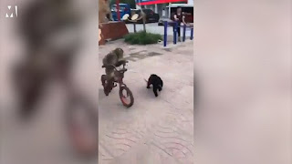 NOBODY STEPPED IN TO HELP MONKEY ON A PUSH BIKE BEING CHASED BY A DOG