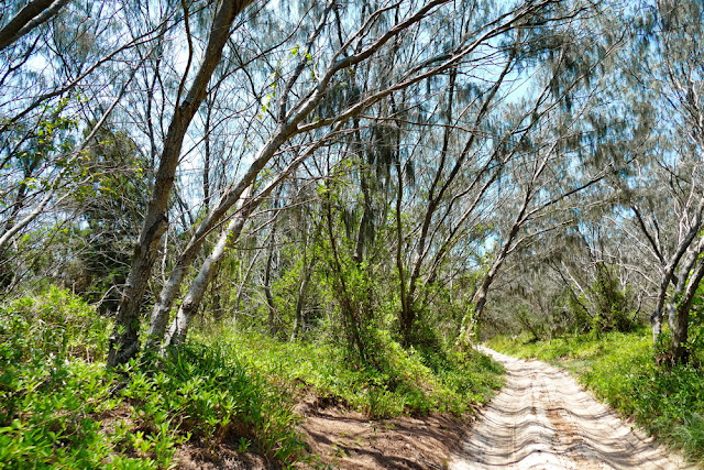Sandpiste Sandstrasse Wald Moreton Island Wildnis Bäume
