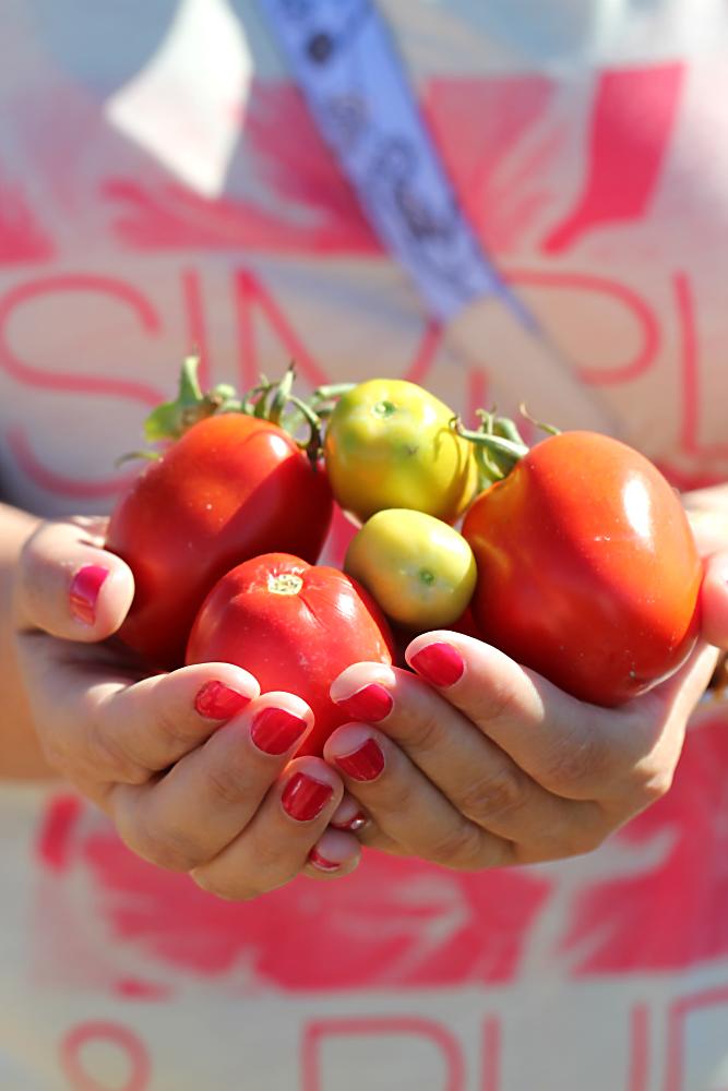Tomaten, feldfrisch in Andreas' Händen | Arthurs Tochter Kocht von Astrid Paul