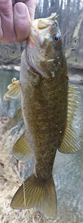little patuxent smallmouth