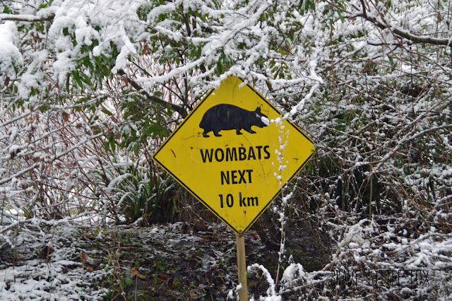 Schild Wombats Erlebnis-Zoo Hannover