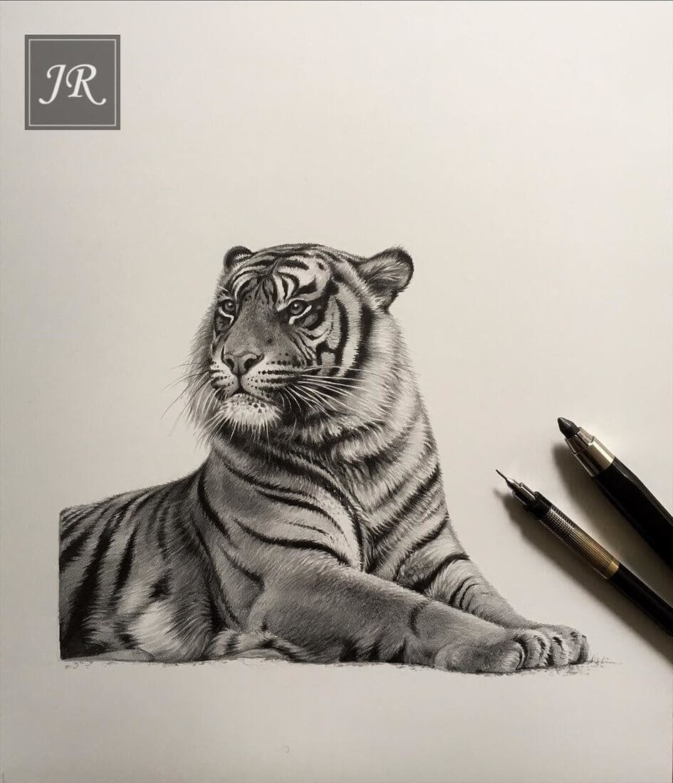 08-Inquisitive-Tiger-Julie-Rhodes-Color-Pencil-Wild-Animal-Drawings-www-designstack-co