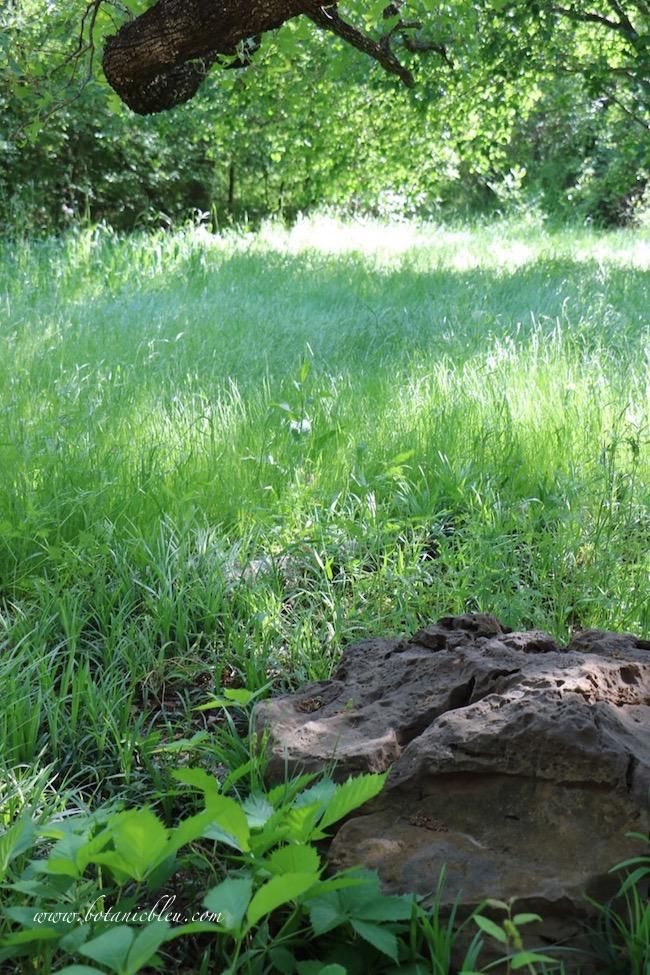South green grass meadow backyard