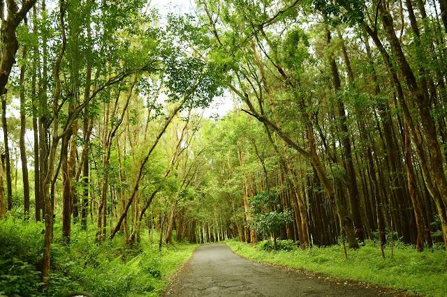 Faktor Apakah Yang Mempengaruhi Perbedaan Luas Hutan