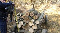 Doi tineri din Ciupercenii Noi, depistaţi în timp ce tăiau arbori din pădure