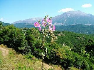 Φυτά στην Ελληνική Μυθολογία