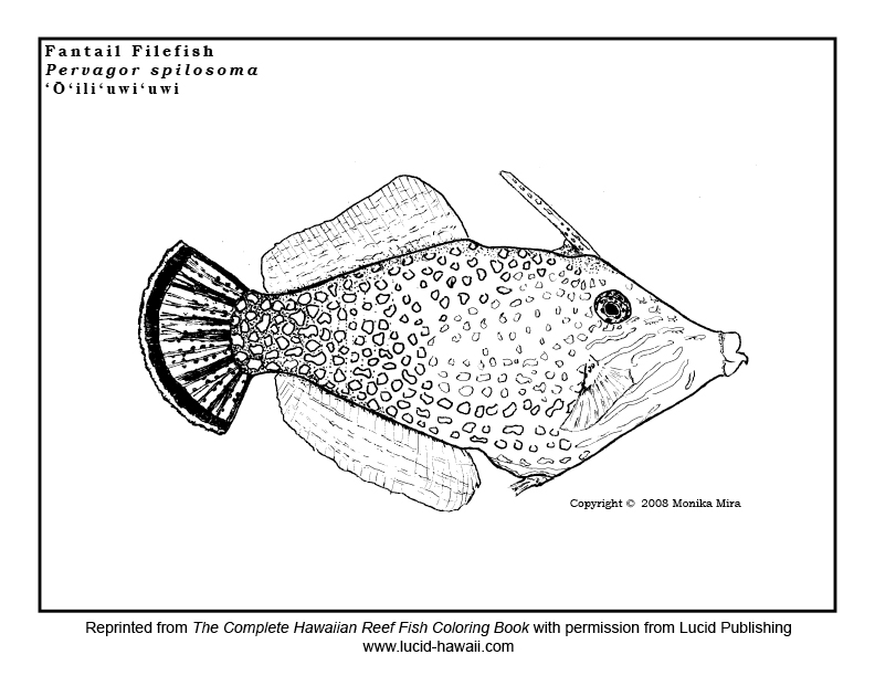 Kauai Snorkeling: Free Reef Fish Coloring Sheets