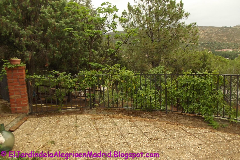 El Jardín De La Alegría 07 20 17