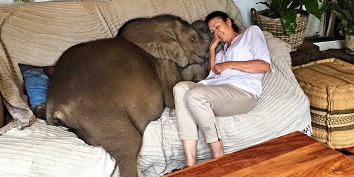 Woman Saves A Baby Elephant From Death And She Now Follows Her Everywhere