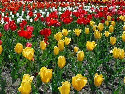 一面の春の花。