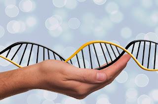 Estados não podem legislar sobre Organismos Geneticamente Modificados - OGM, diz STF.