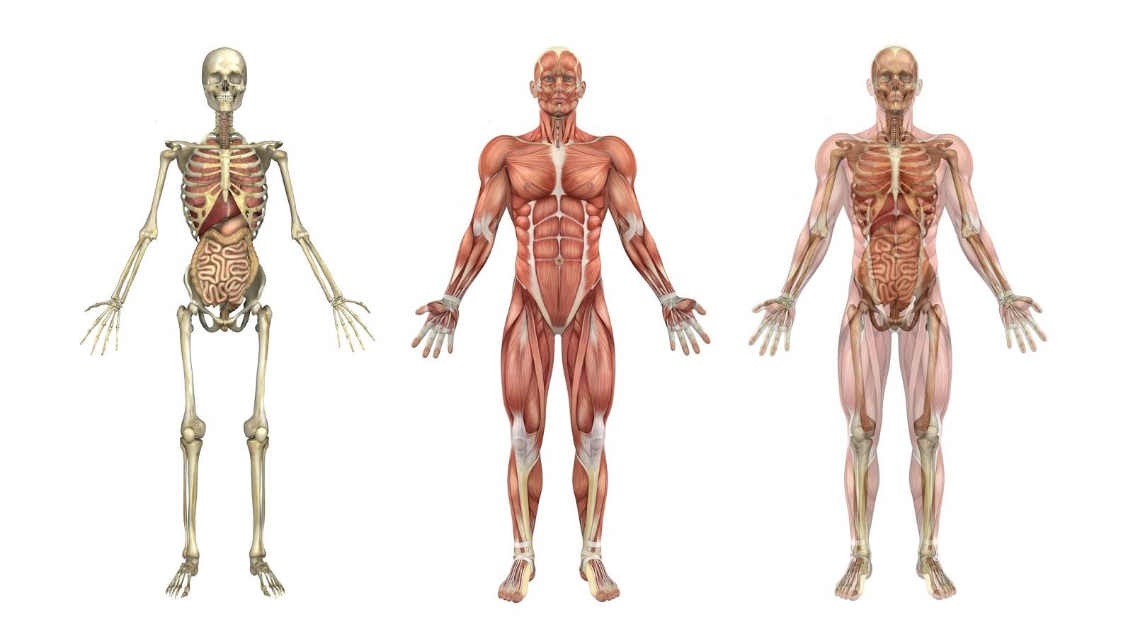 Test de anatomía ¡Demuestra tus conocimientos! | Ortografía y literatura