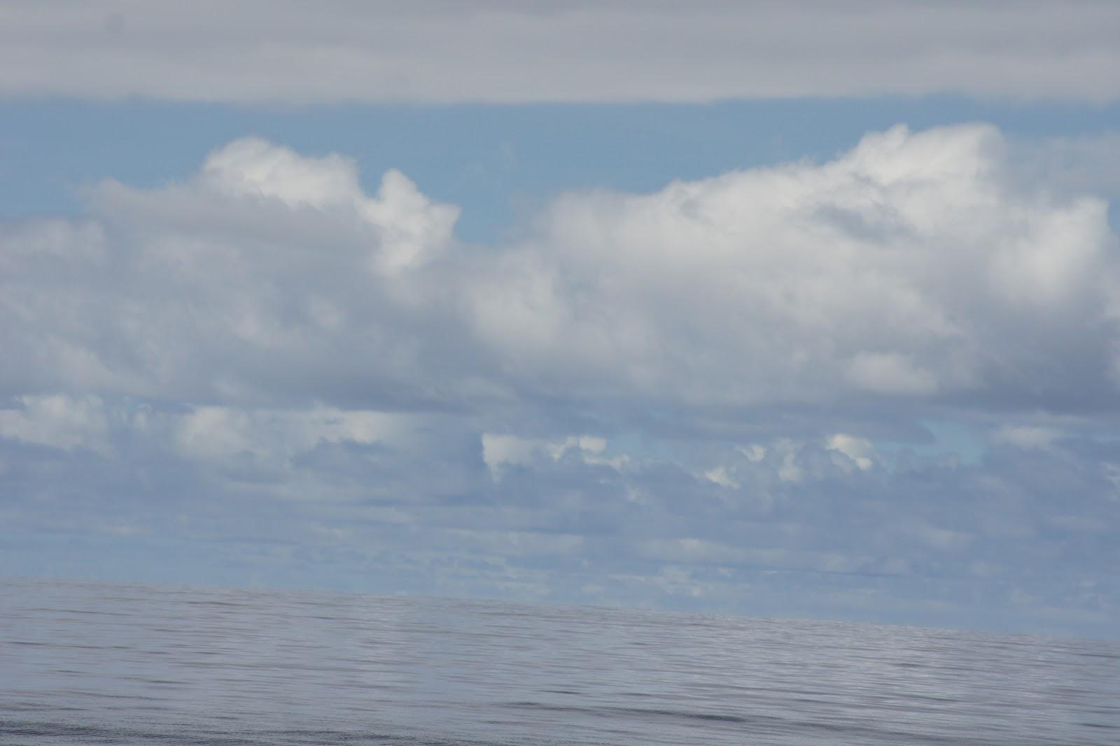 Dolphinday Gedichte Zum Meer