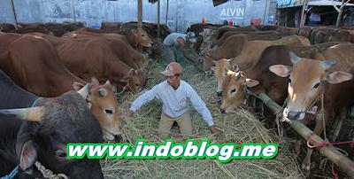 Berita Pertanian dan Peternakan Terkini Terbaru 2016