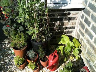 gardening, herb garden