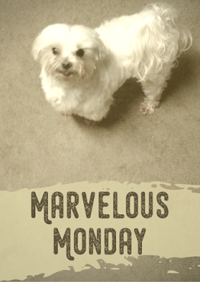 Marvelous Monday, Lexi, Charity Rowell, On My Kindle Book Reviews