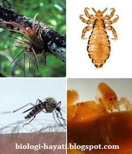 Simbiosis di Alam