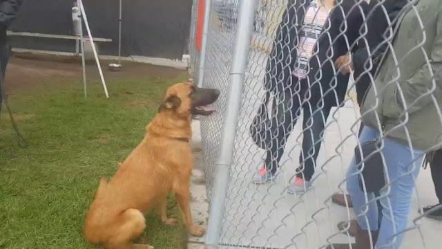 Perro abandonado reconoce a sus dueños en el refugio