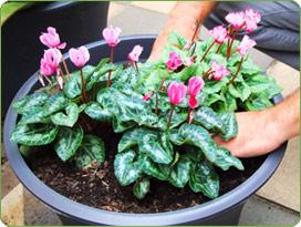 Növény a télikert teraszbeépítés