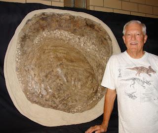 Fósil Platyceramus Platinus