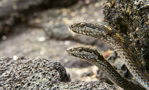 Image result for snakes emerging from the earth