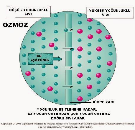 Osmoz Nedir biyoloji