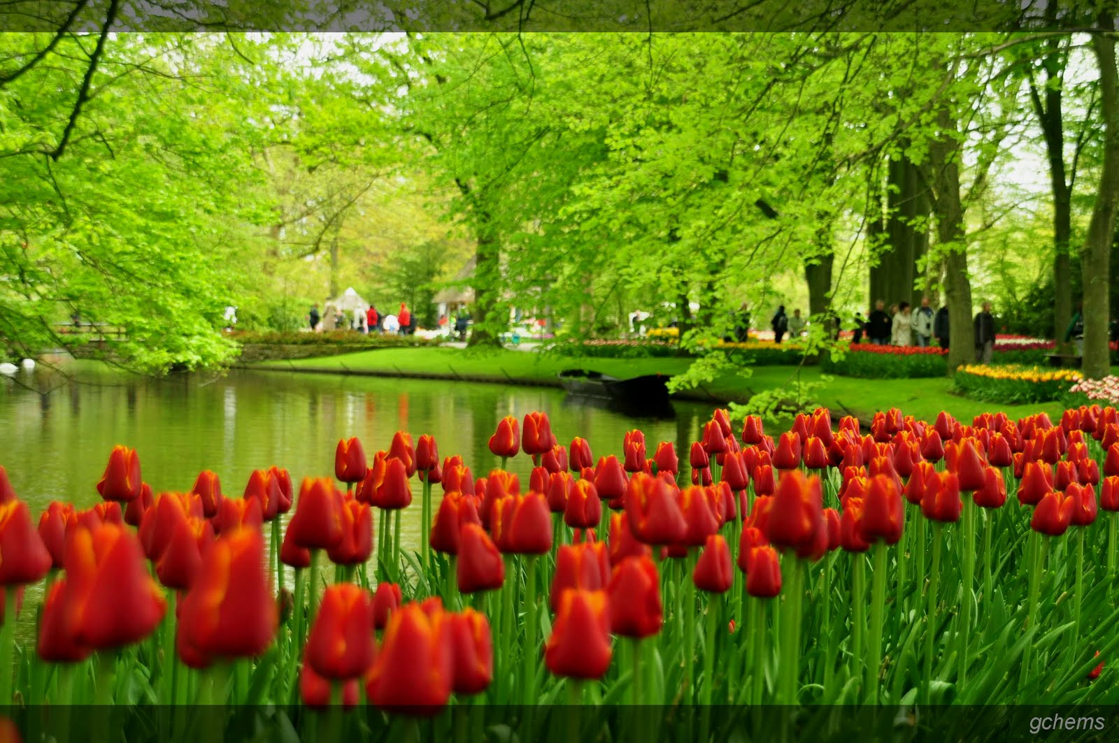 Holland Tulip Gardens HD Wallpapers