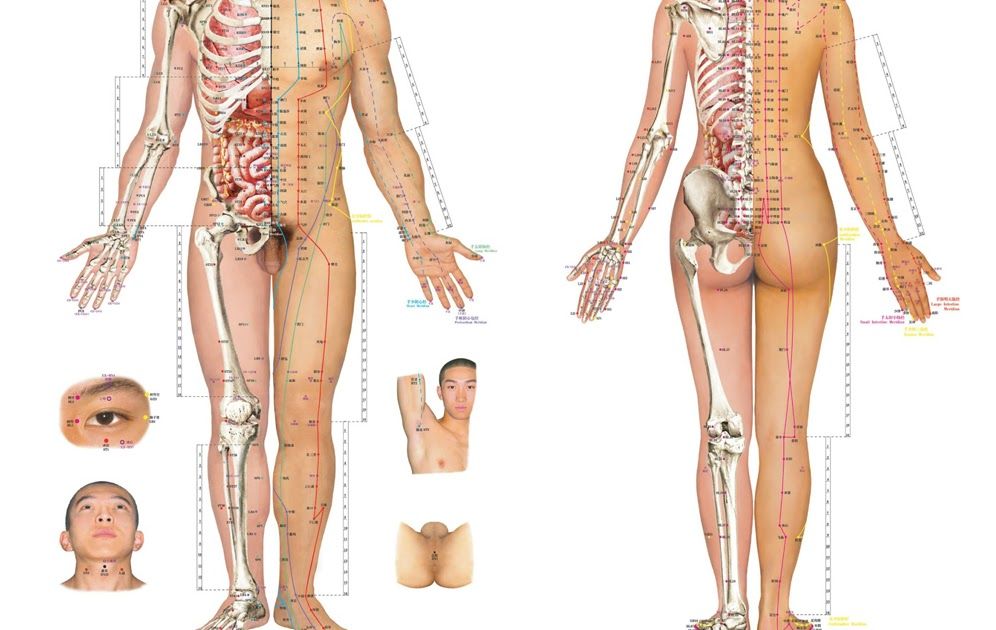 Acupuncture Masters: A Few Commonly Used Acupuncture Points