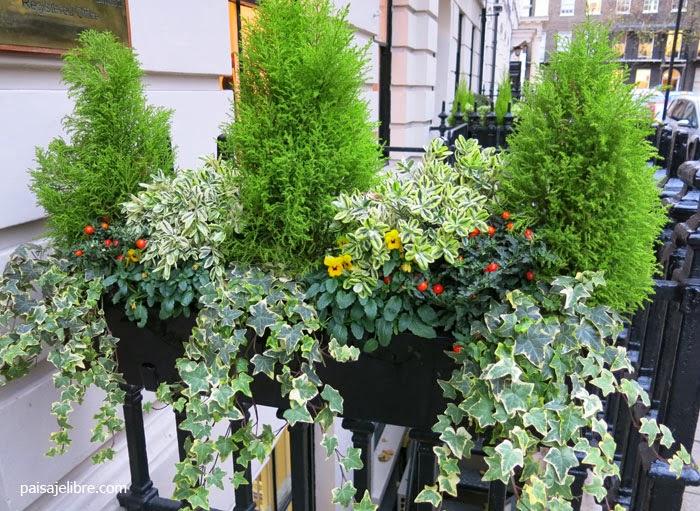 Composiciones de plantas para jardineras en invierno | Paisaje Libre