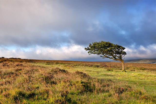 Small windswept tree in the morning light on Exmoor National Park by Martyn Ferry Photography