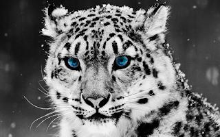 leopardo bebé ojos azules