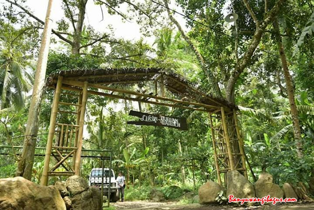 Likin durian garden, Songgon.