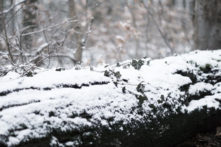 Blog + Fotografie by it's me! - Draussen - Frau Frieda sucht Schnee, Efeuzweig auf einem zugeschneiten Baumstamm