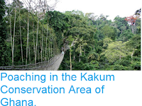 http://sciencythoughts.blogspot.com/2018/04/poaching-in-kakum-conservation-area-of.html