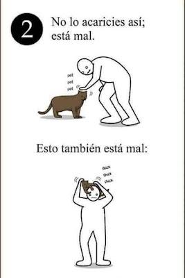 5 tips para entender a tu gato (Humor)