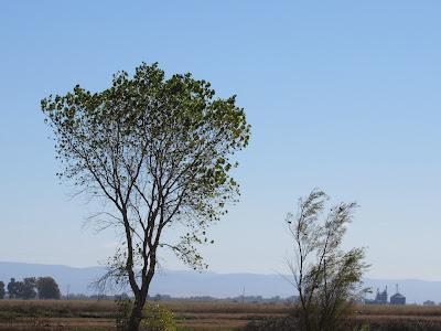 California Wildlife Management Area