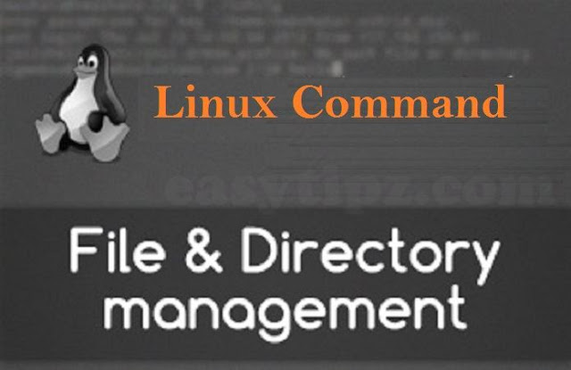 (Linux Command Line) Part 2 - Linux Commands for File and Folder/Directory Management
