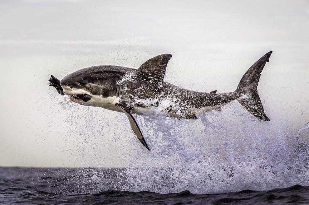Las 13 fotos más impresionantes e increíbles que hayas visto