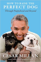 6 Books Your Dog Wishes You Would Read - The Best Resources For Puppy Raising or Dog Training - How to Raise the Perfect Dog by Cesar Millan - via Devastate Boredom