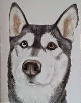 Sparky the Husky Dog