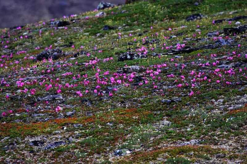 tundra biome abiotic factors