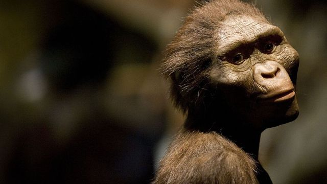 How did our most famous ancestor Lucy die?