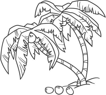 Palmeras Con Cocos Para Colorear Y Pintar Dibujo Views