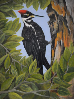 Painting Pileated Woodpecker Session 6