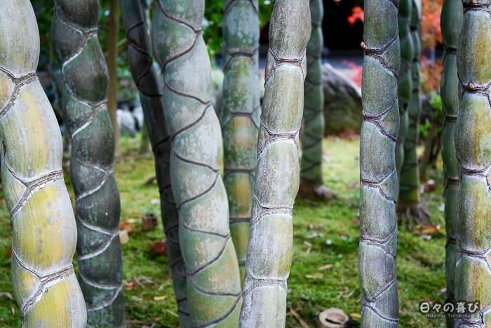 troncs de bambous, jardin Shokado de Yawata, Kyoto